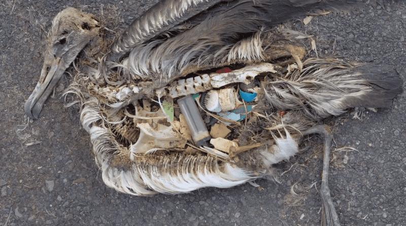 risks of plastic