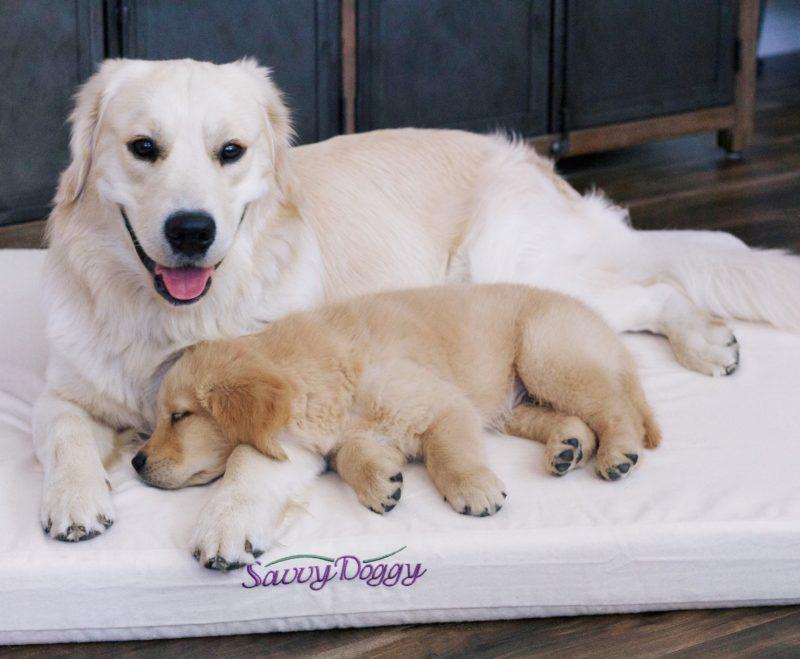 Savvy Rest Organic Pet Bed